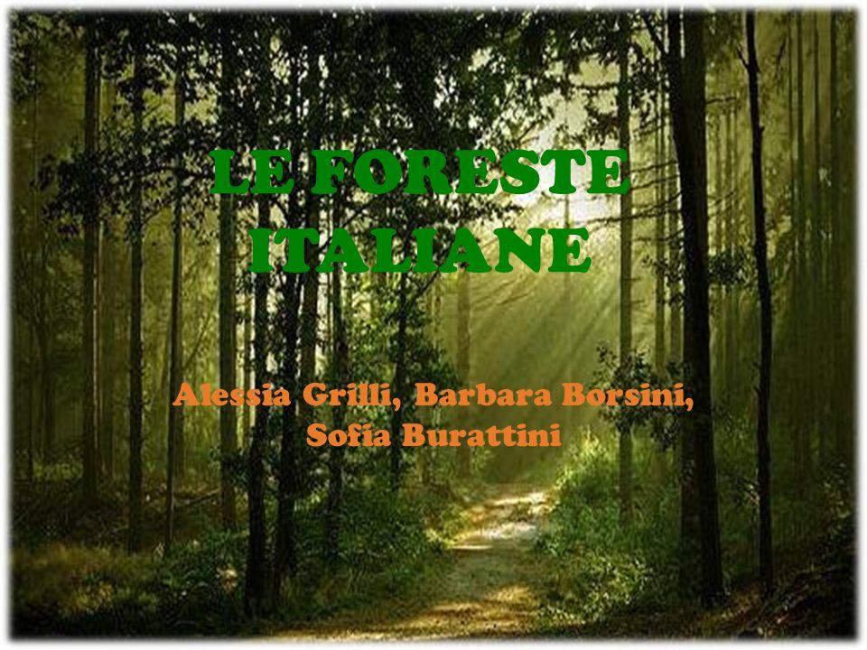 Alessia Grilli, Barbara Borsini, Sofia Burattini
