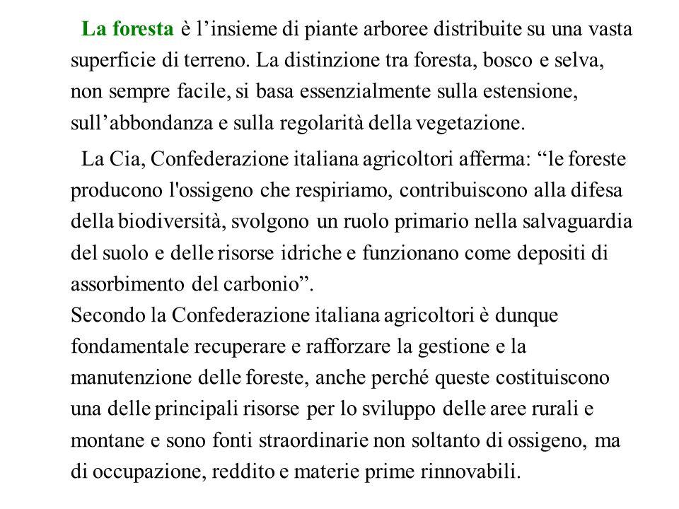 La foresta è l'insieme di piante arboree distribuite su una vasta superficie di terreno. La distinzione tra foresta, bosco e selva, non sempre facile, si basa essenzialmente sulla estensione, sull'abbondanza e sulla regolarità della vegetazione.