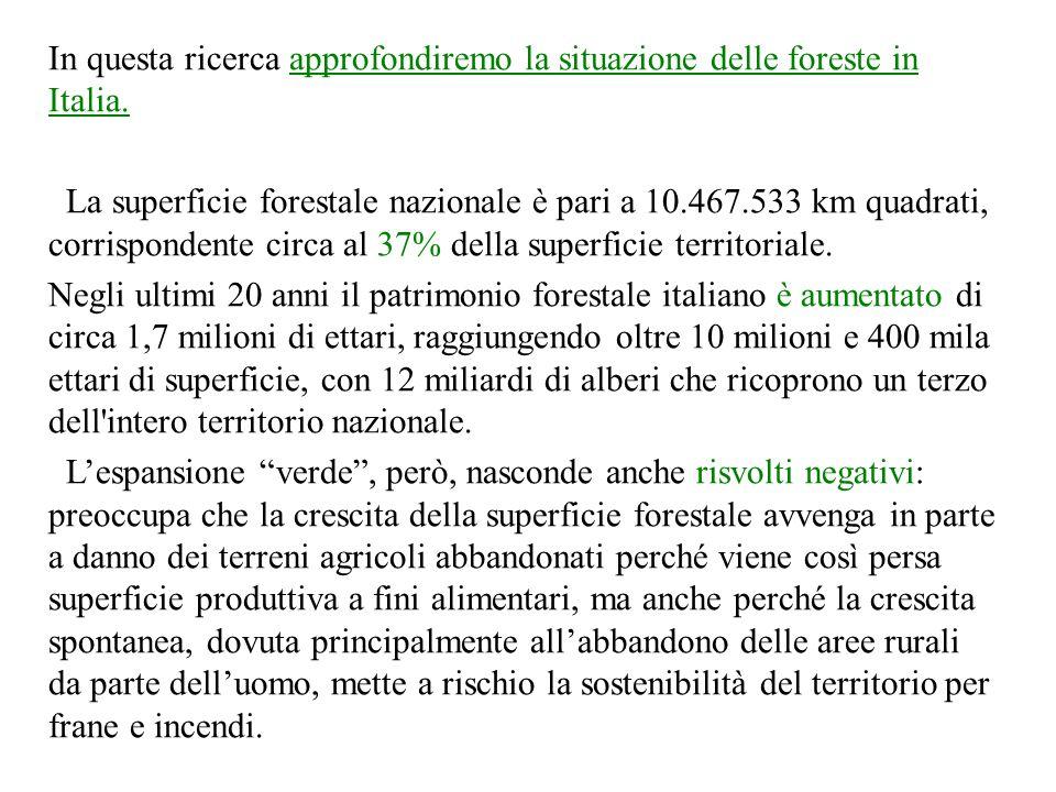 In questa ricerca approfondiremo la situazione delle foreste in Italia