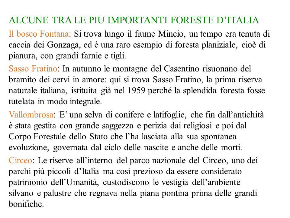 ALCUNE TRA LE PIU IMPORTANTI FORESTE D'ITALIA