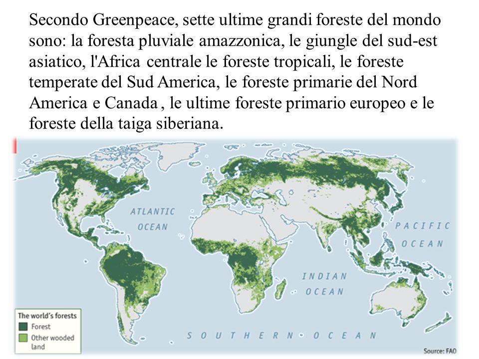 Secondo Greenpeace, sette ultime grandi foreste del mondo sono: la foresta pluviale amazzonica, le giungle del sud-est asiatico, l Africa centrale le foreste tropicali, le foreste temperate del Sud America, le foreste primarie del Nord America e Canada , le ultime foreste primario europeo e le foreste della taiga siberiana.