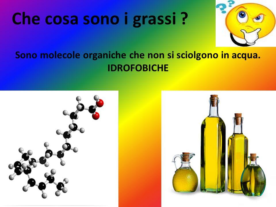 Sono molecole organiche che non si sciolgono in acqua. IDROFOBICHE