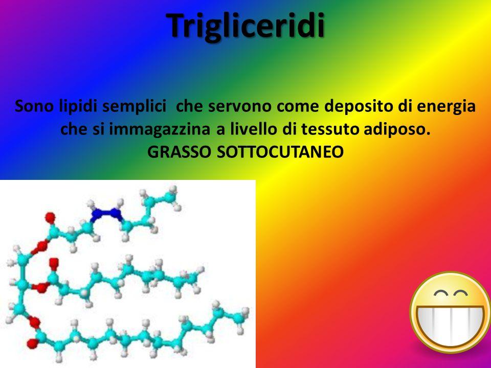 Trigliceridi Sono lipidi semplici che servono come deposito di energia che si immagazzina a livello di tessuto adiposo.