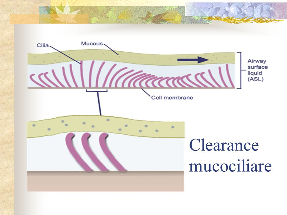 Clearance mucociliare