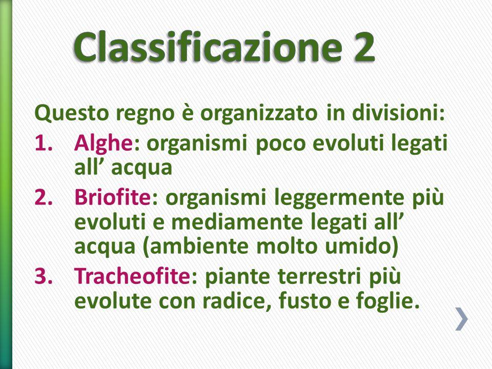 Classificazione 2 Questo regno è organizzato in divisioni: