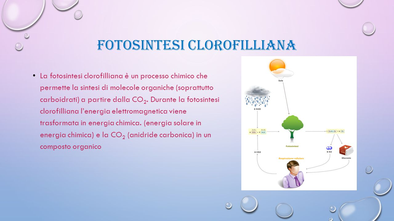 Fotosintesi clorofilliana