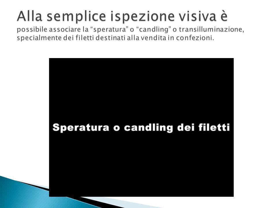 Alla semplice ispezione visiva è possibile associare la speratura o candling o transilluminazione, specialmente dei filetti destinati alla vendita in confezioni.