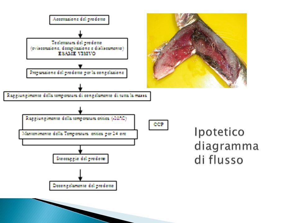 Ipotetico diagramma di flusso