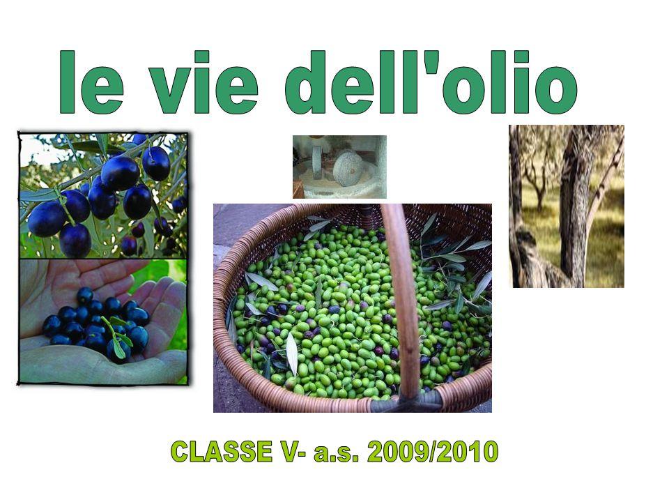 le vie dell olio CLASSE V- a.s. 2009/2010