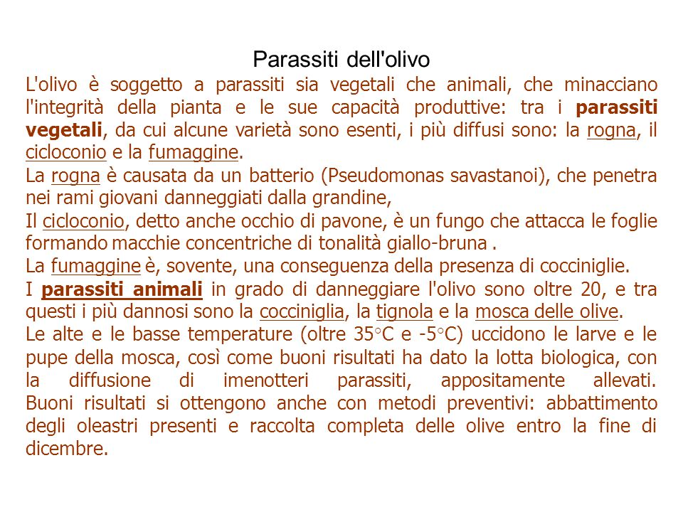 Parassiti dell olivo