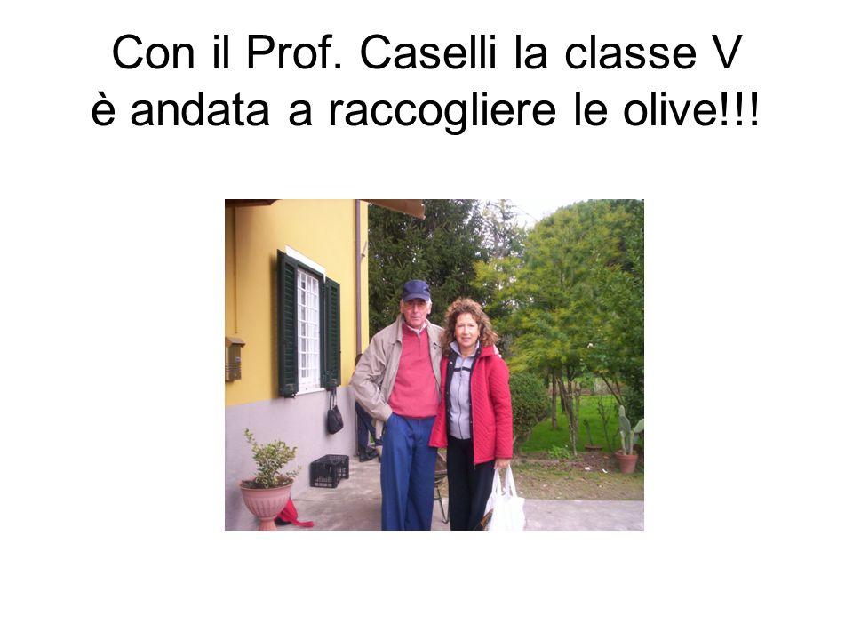 Con il Prof. Caselli la classe V è andata a raccogliere le olive!!!