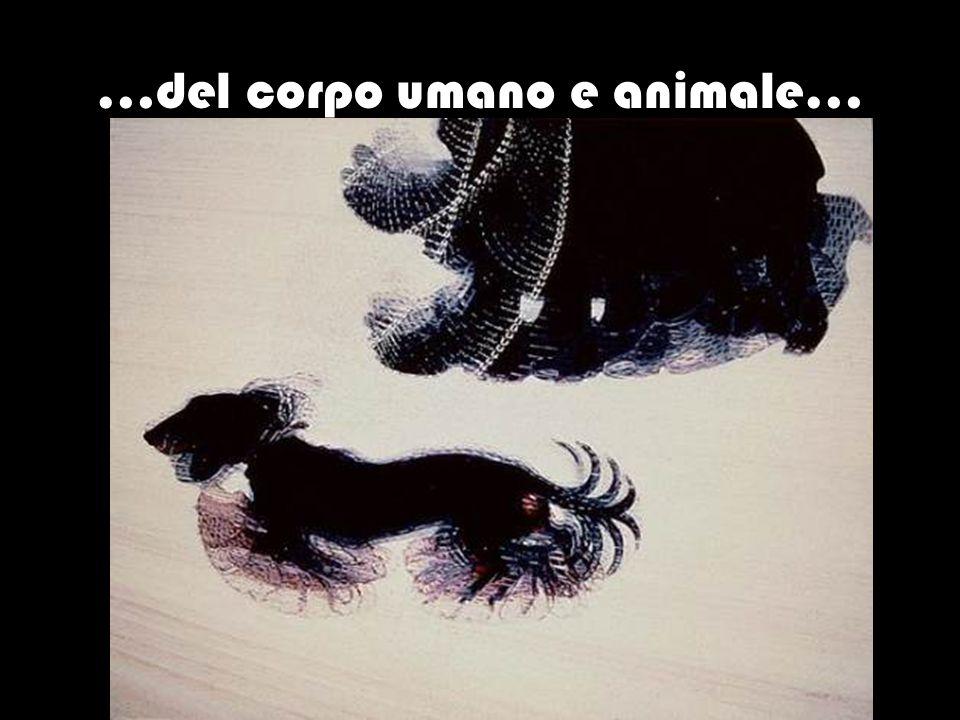 …del corpo umano e animale…
