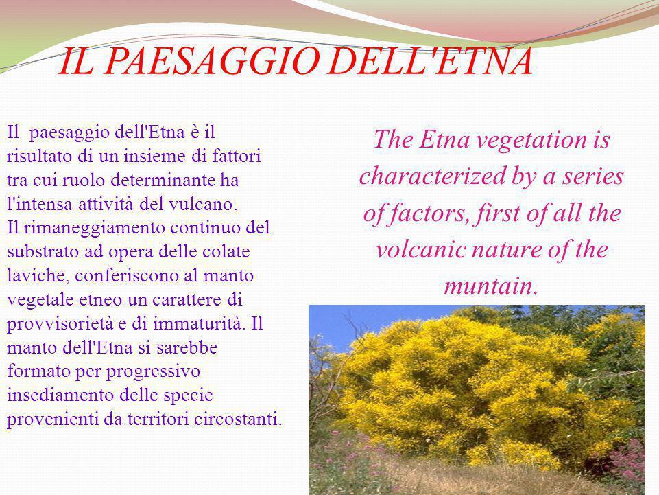 IL PAESAGGIO DELL ETNA Il paesaggio dell Etna è il risultato di un insieme di fattori tra cui ruolo determinante ha l intensa attività del vulcano.