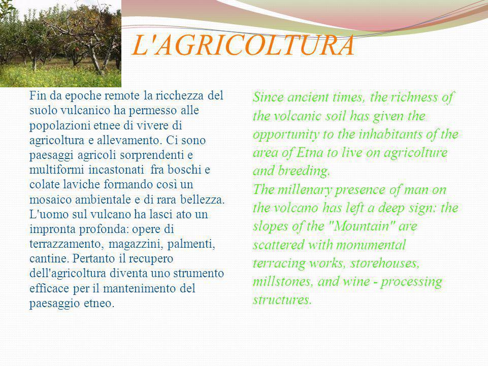 L AGRICOLTURA