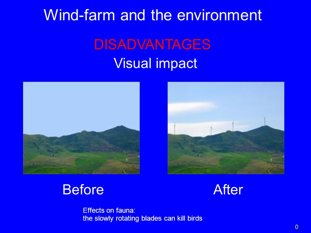 Wind-farm and the environment