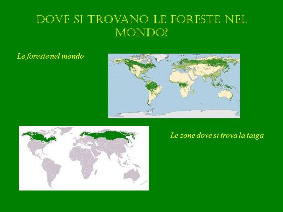 Dove si trovano le foreste nel mondo