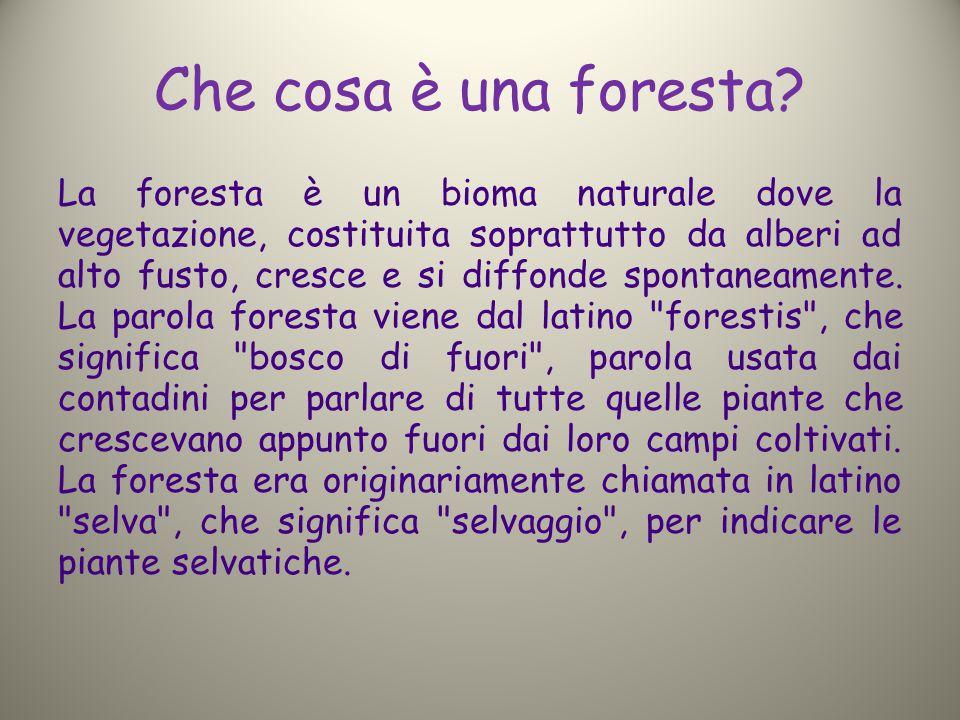 Che cosa è una foresta