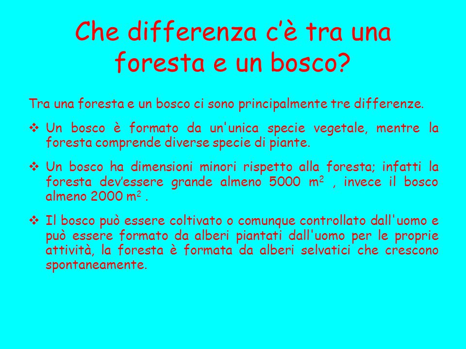 Che differenza c'è tra una foresta e un bosco