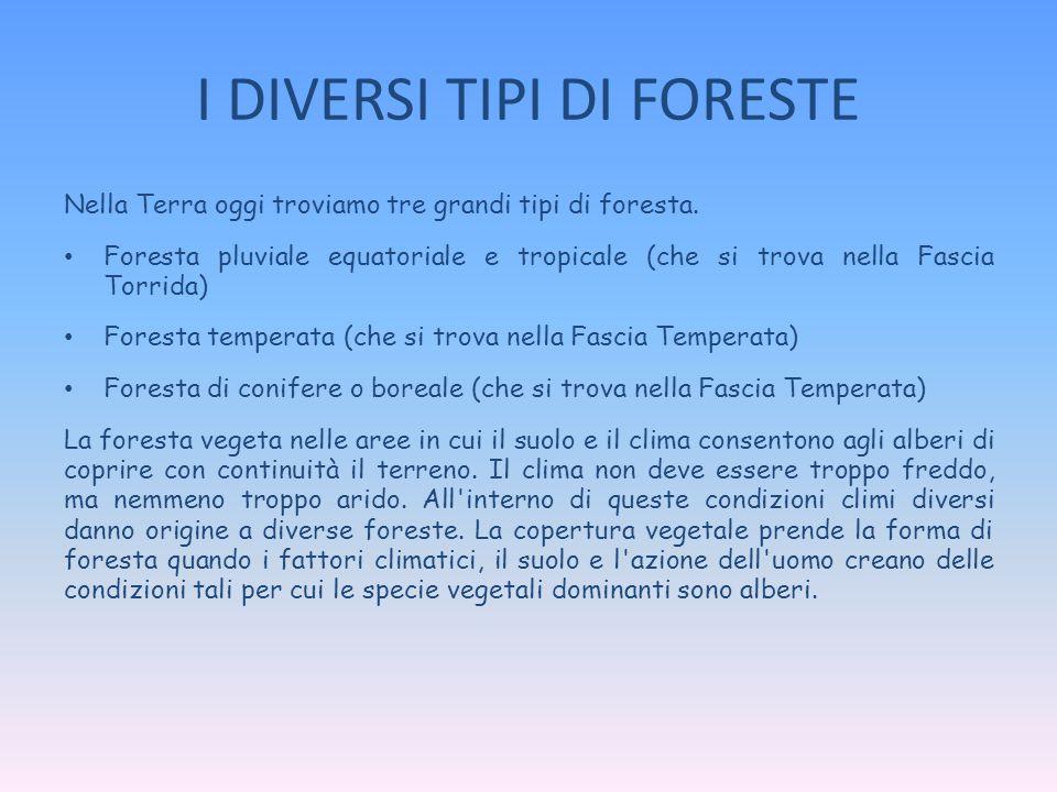 I DIVERSI TIPI DI FORESTE