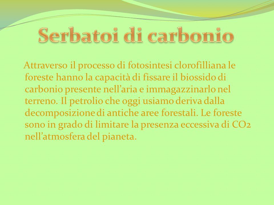 Serbatoi di carbonio