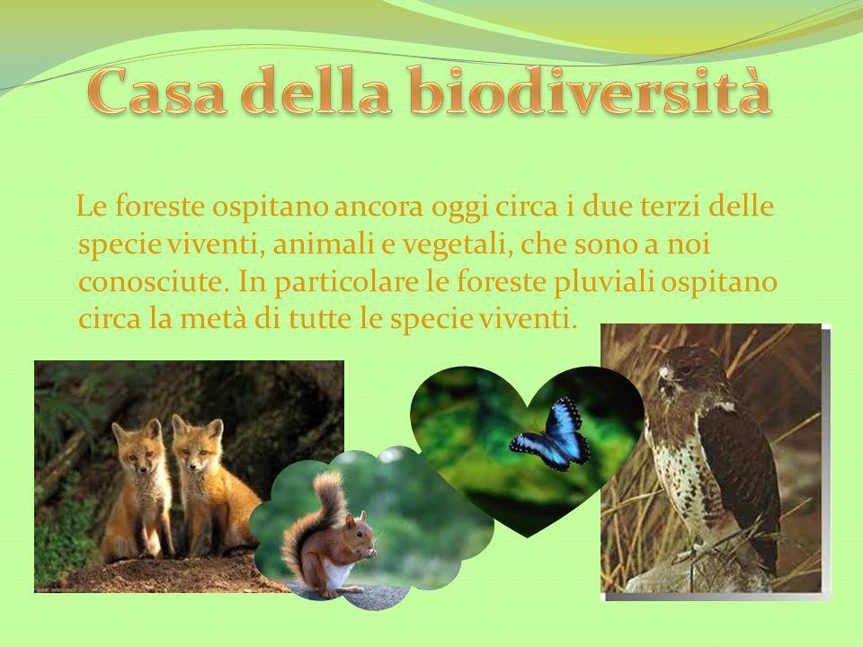 Casa della biodiversità