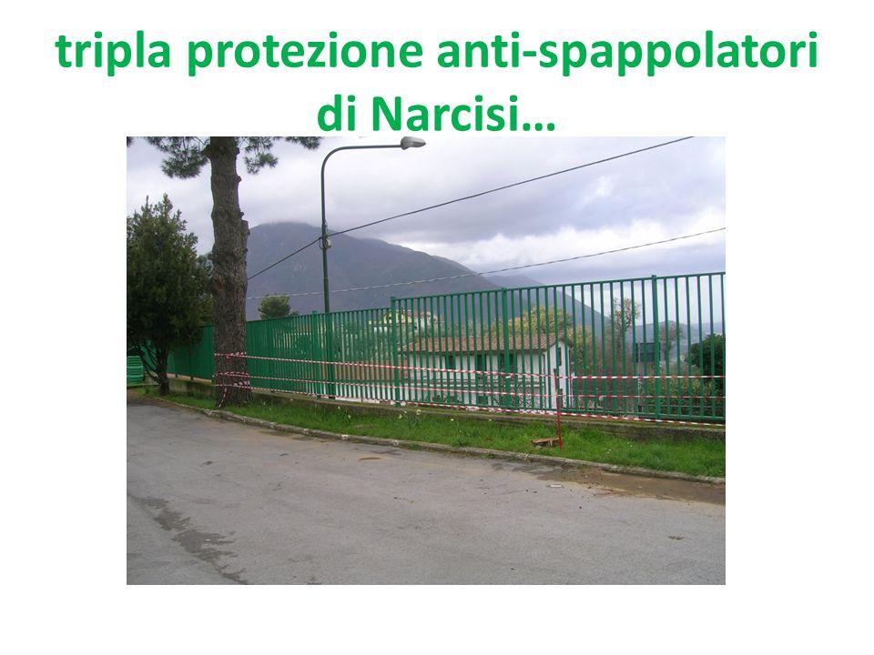 tripla protezione anti-spappolatori di Narcisi…
