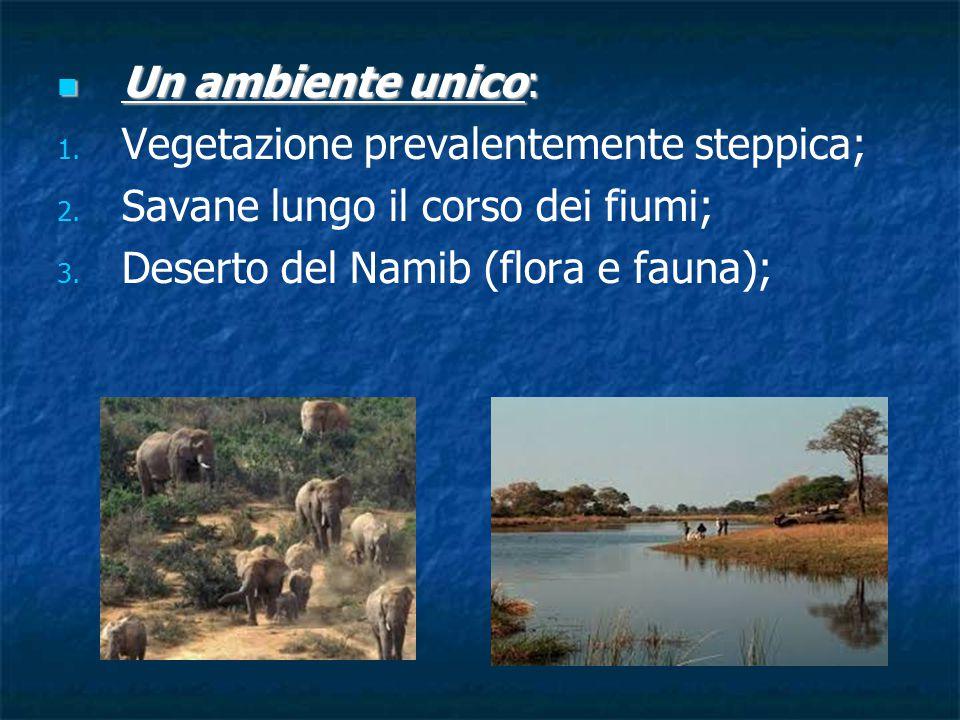 Un ambiente unico: Vegetazione prevalentemente steppica; Savane lungo il corso dei fiumi; Deserto del Namib (flora e fauna);