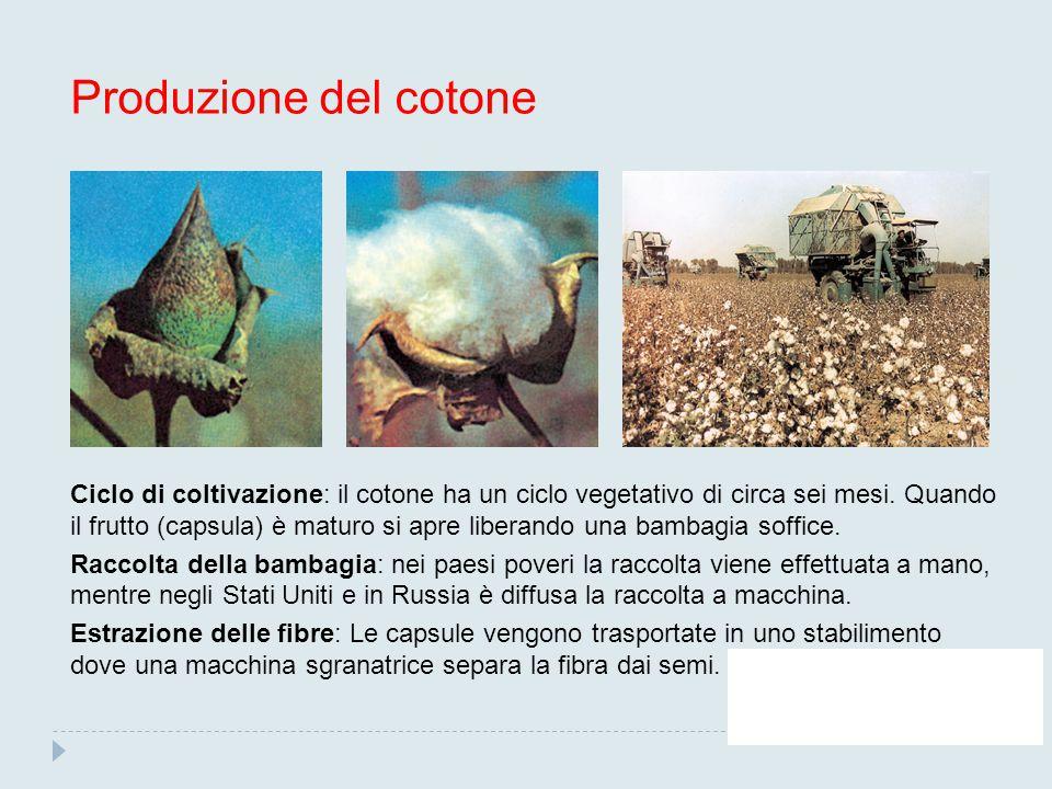 Produzione del cotone
