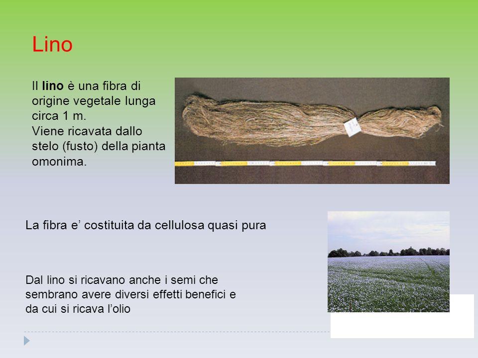Lino Il lino è una fibra di origine vegetale lunga circa 1 m. Viene ricavata dallo stelo (fusto) della pianta omonima.