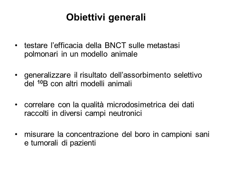 Obiettivi generali testare l'efficacia della BNCT sulle metastasi polmonari in un modello animale.
