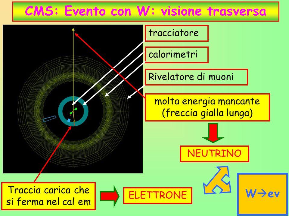 CMS: Evento con W: visione trasversa