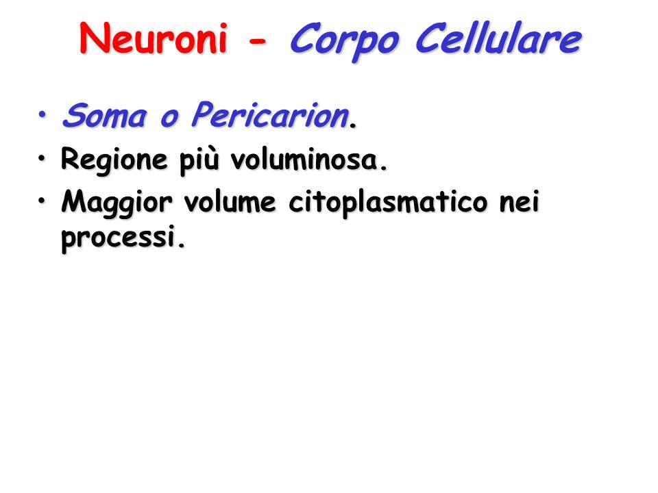 Neuroni - Corpo Cellulare