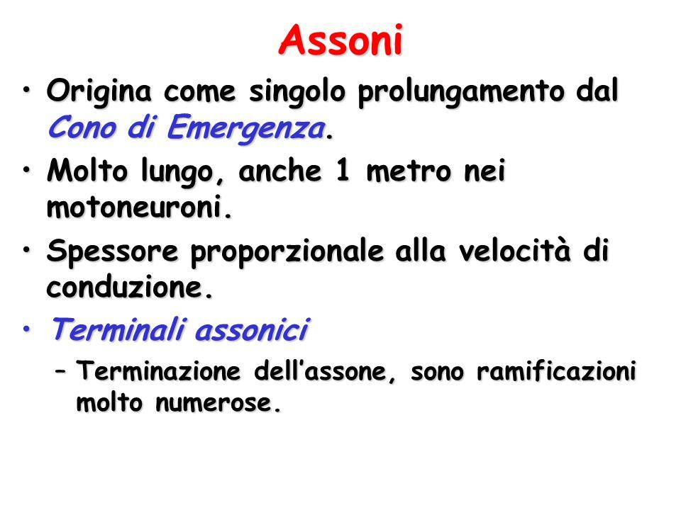 Assoni Origina come singolo prolungamento dal Cono di Emergenza.