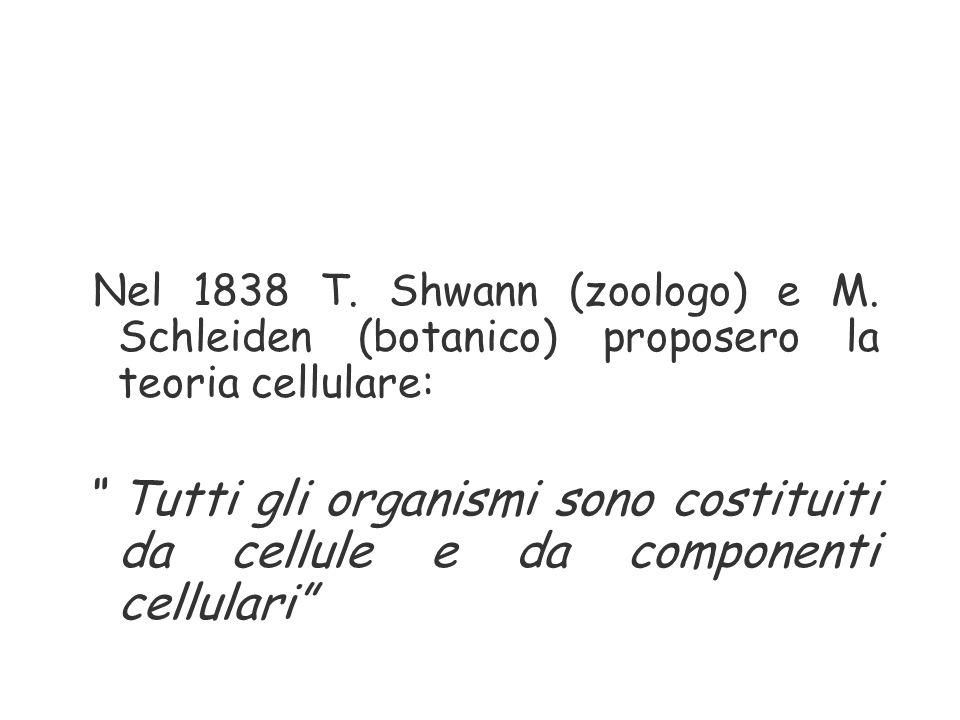Nel 1838 T. Shwann (zoologo) e M