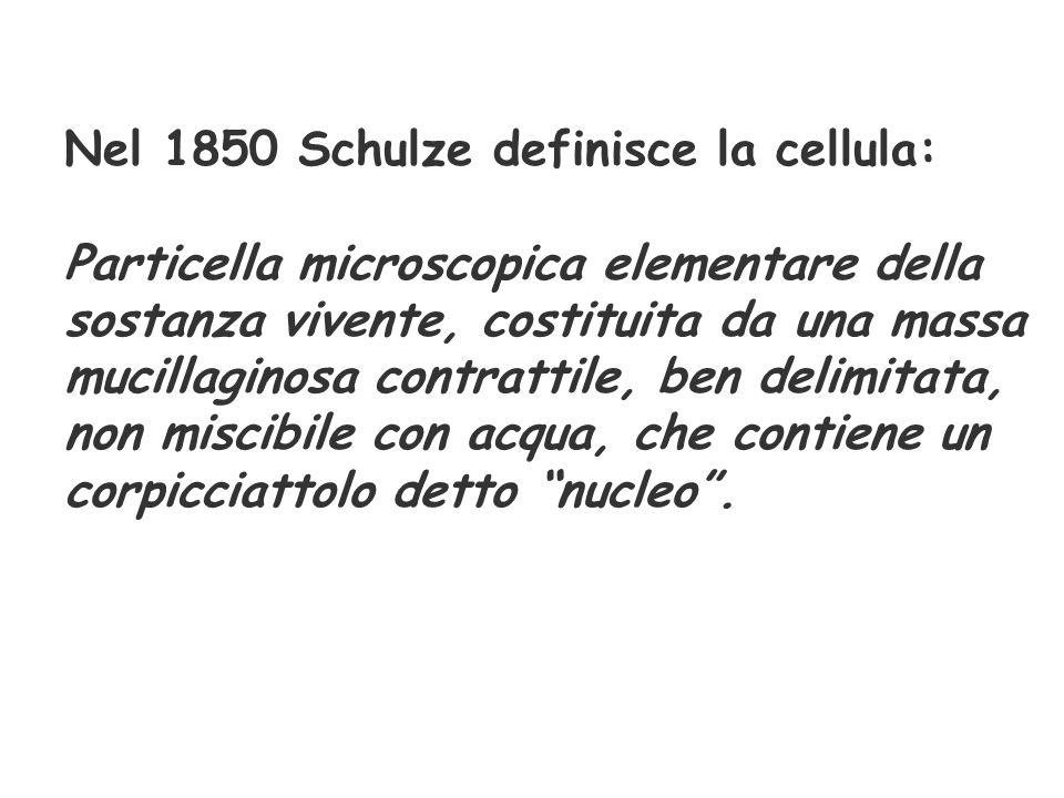 Nel 1850 Schulze definisce la cellula: