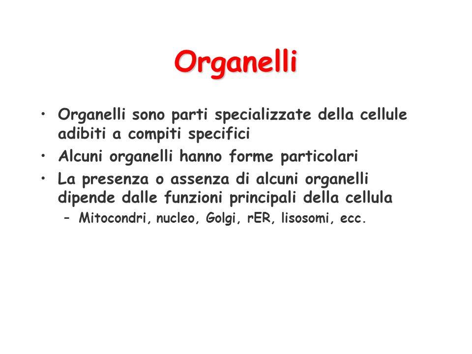 Organelli Organelli sono parti specializzate della cellule adibiti a compiti specifici. Alcuni organelli hanno forme particolari.