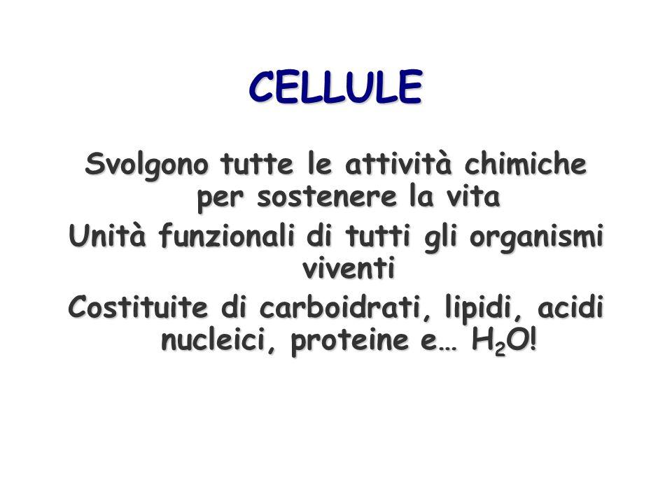 CELLULE Svolgono tutte le attività chimiche per sostenere la vita