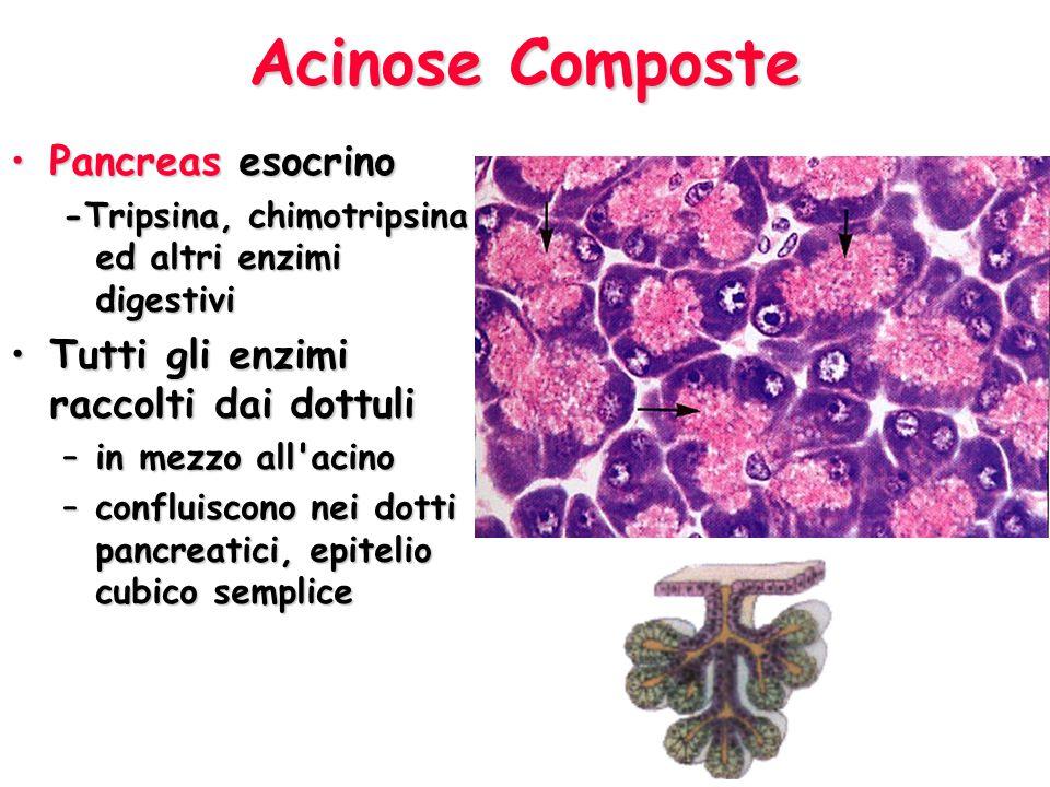 Acinose Composte Pancreas esocrino