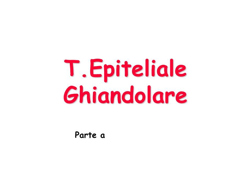T.Epiteliale Ghiandolare