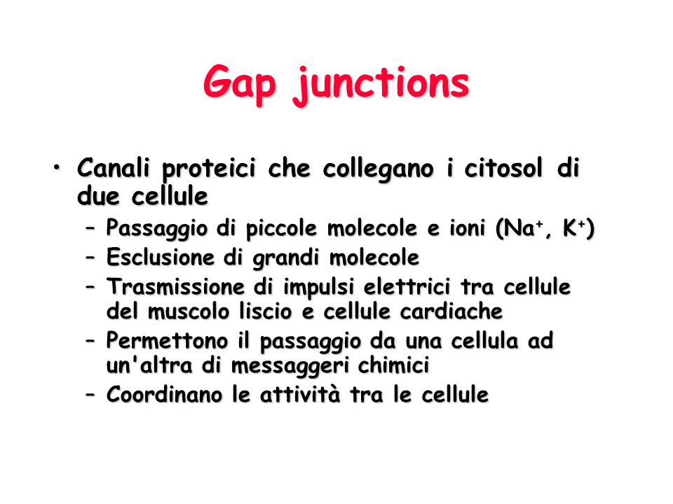 Gap junctions Canali proteici che collegano i citosol di due cellule
