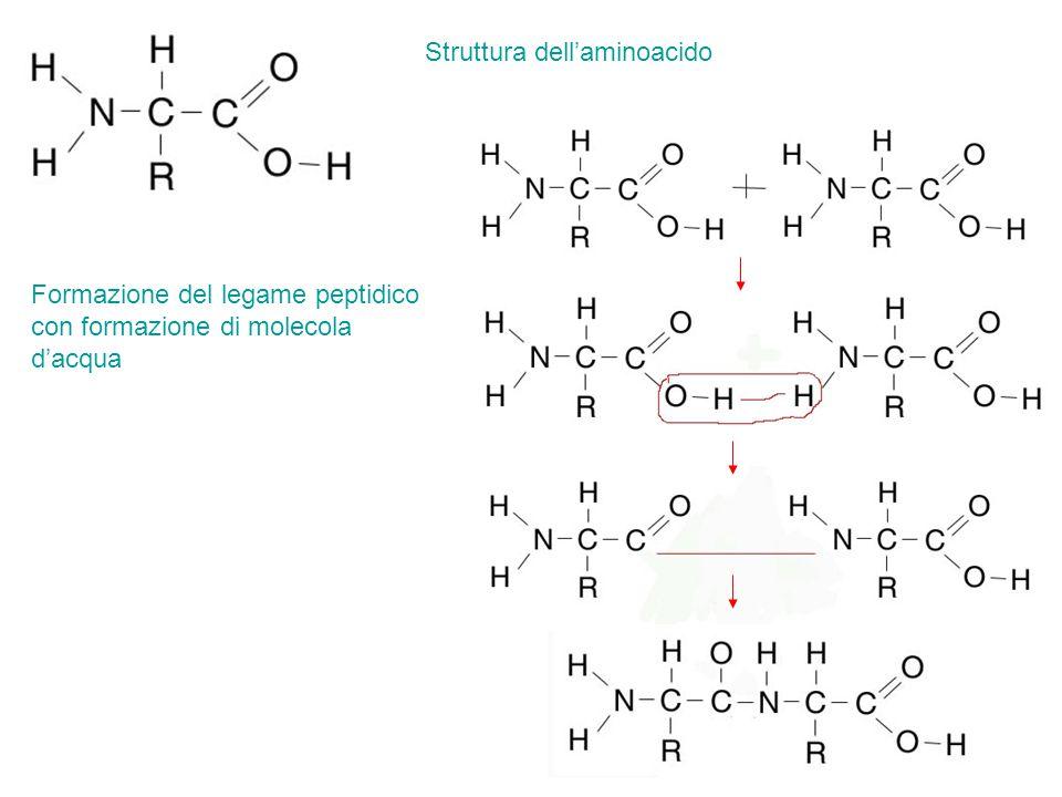 Struttura dell'aminoacido