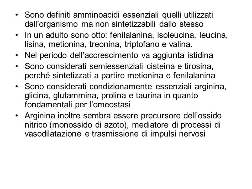Sono definiti amminoacidi essenziali quelli utilizzati dall'organismo ma non sintetizzabili dallo stesso