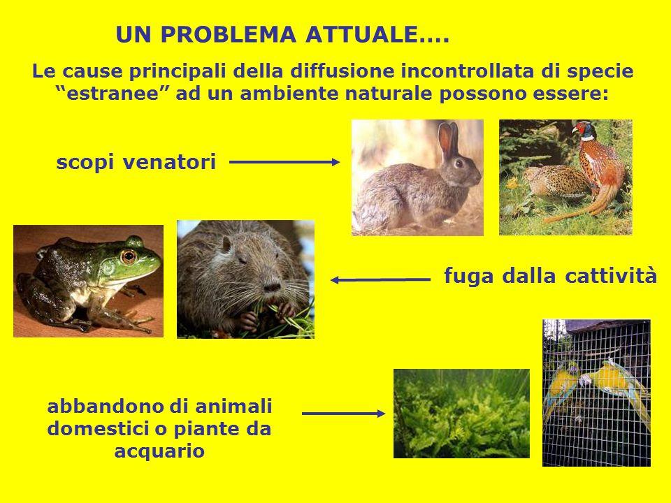abbandono di animali domestici o piante da acquario