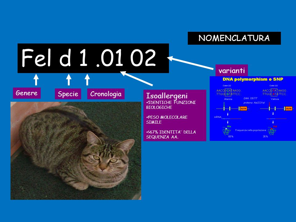 Fel d 1 .01 02 NOMENCLATURA varianti Isoallergeni Genere Specie