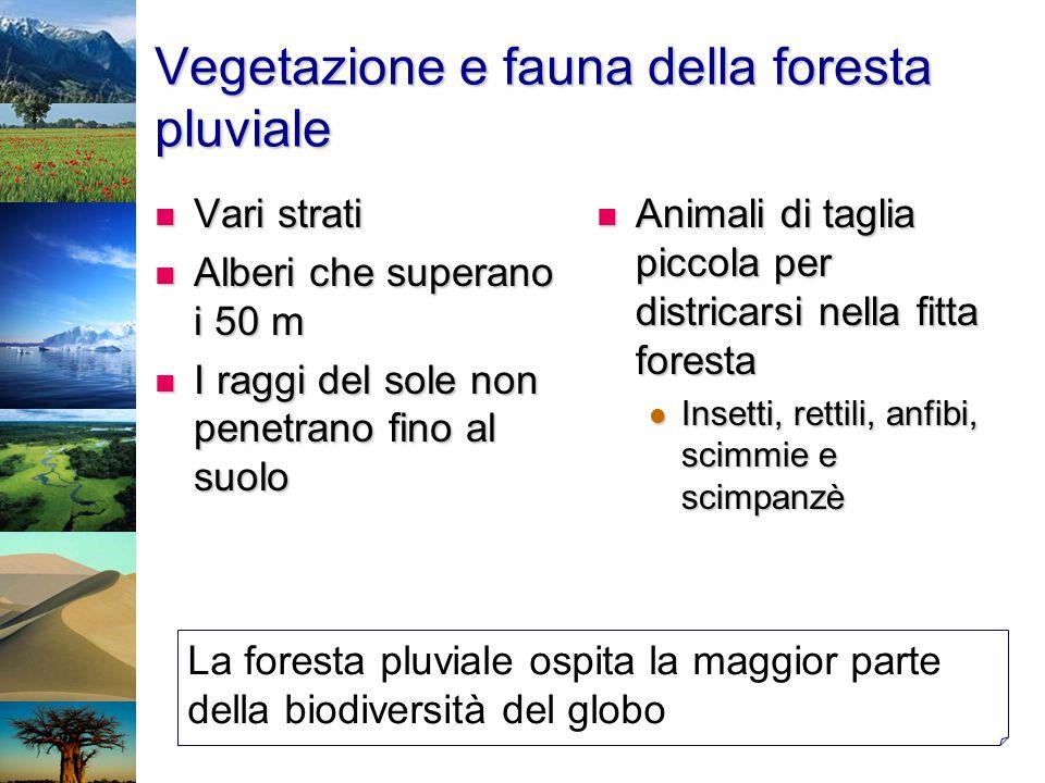 Vegetazione e fauna della foresta pluviale