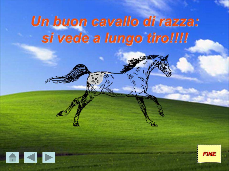 Un buon cavallo di razza: si vede a lungo tiro!!!!