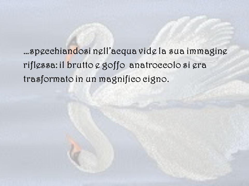 …specchiandosi nell'acqua vide la sua immagine riflessa: il brutto e goffo anatroccolo si era trasformato in un magnifico cigno.