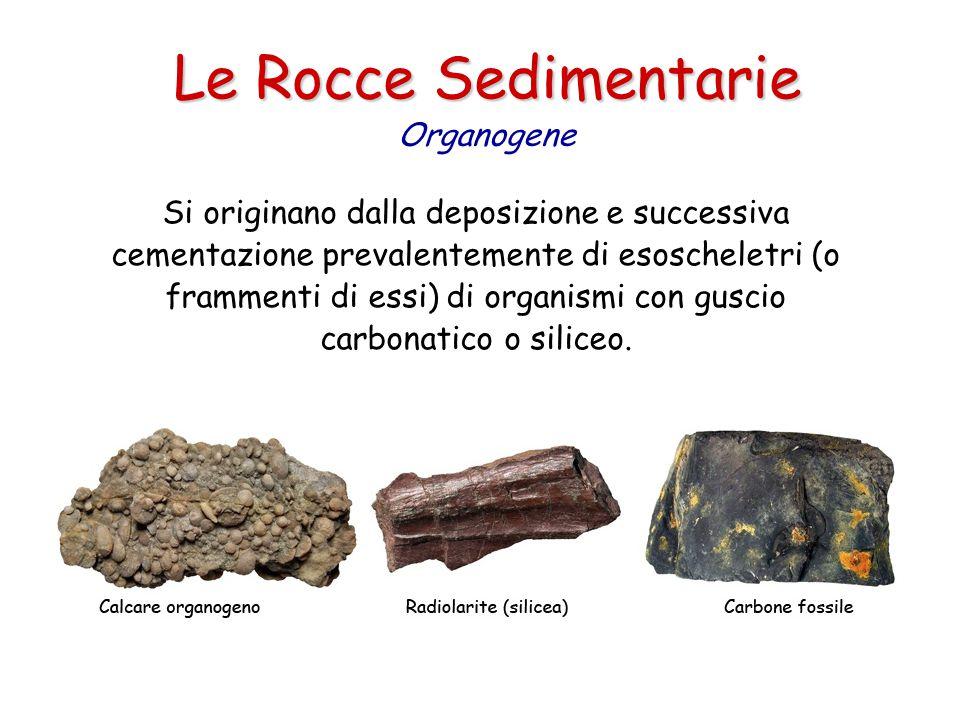 Le Rocce Sedimentarie Organogene