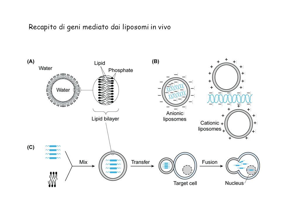 Recapito di geni mediato dai liposomi in vivo
