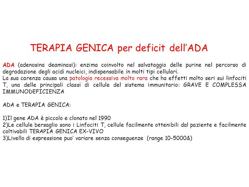 TERAPIA GENICA per deficit dell'ADA